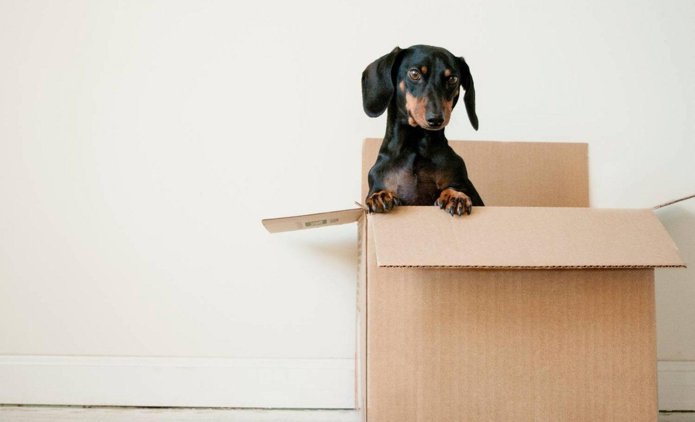 Jak przygotować psa do przeprowadzki?